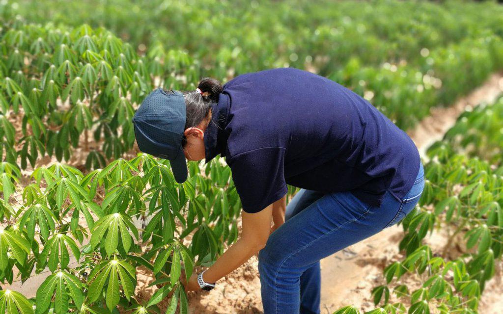 Choix de plantes ornementales de qualité à Marrakech Maroc || Choice of quality ornamental plants in Marrakech Morocco