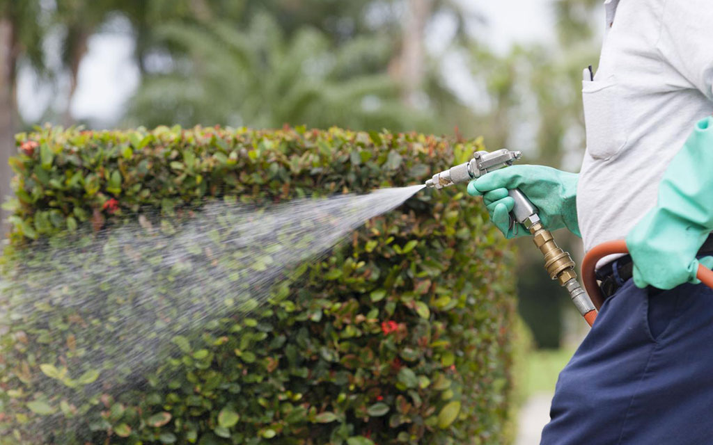 Traitement phytosanitaires des jardins à Marrakech Maroc || Phytosanitary treatment of the gardens in Marrakech Morocco